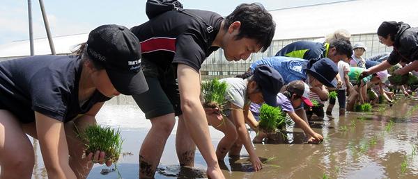 田植えを経験する参加者の写真