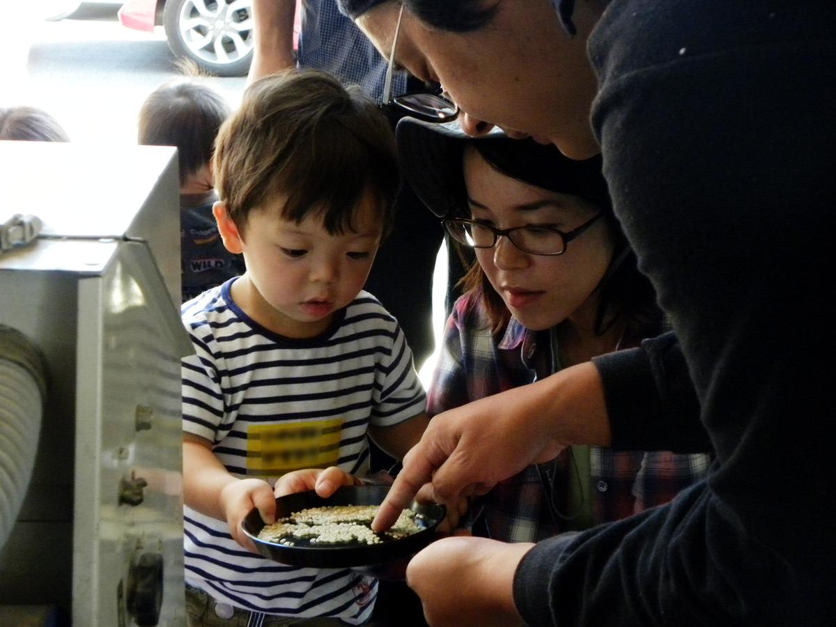 バケツ稲を観察している写真